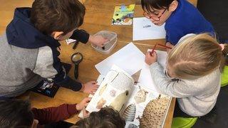 Les écoles alternatives du canton de Neuchâtel victimes de leur succès