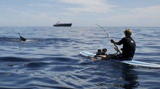 Australie: un marlin atterrit dans un pneumatique et blessent deux hommes