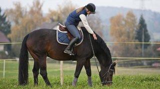 Equitation: près de 3000 jeunes filles se blessent chaque année après une chute à cheval