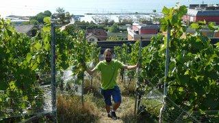 Un vigneron neuchâtelois sur les traces de son père