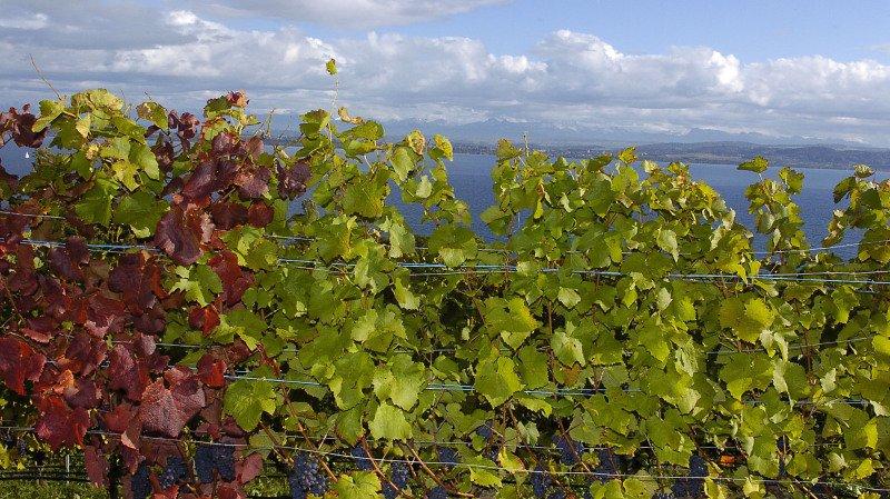 La Ville de Neuchâtel passe au bio sur ses parcelles agricoles et viticoles