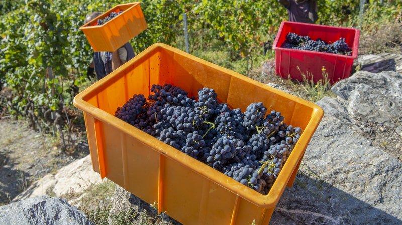 Les communes seraient, en revanche toujours obligées d'assurer la protection du vignoble.