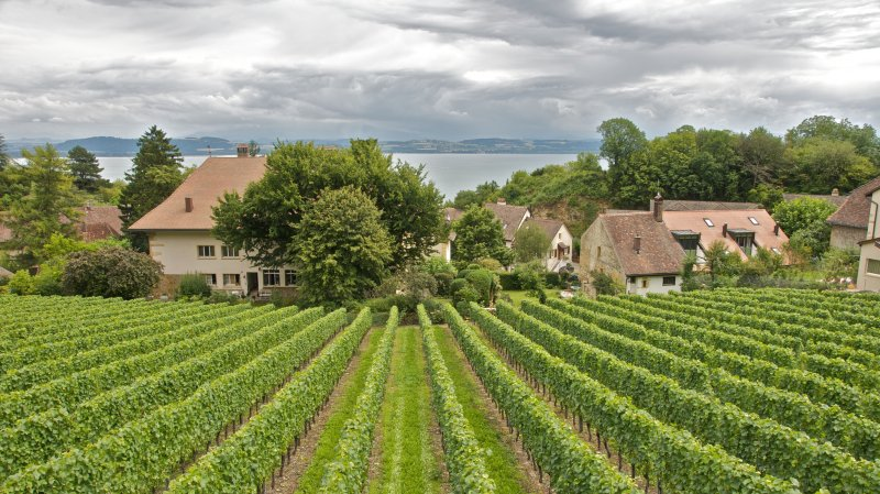 Balade gourmande du vignoble Neuchâtelois