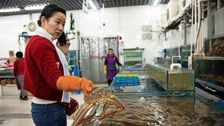Trafic nord-coréen en Chine