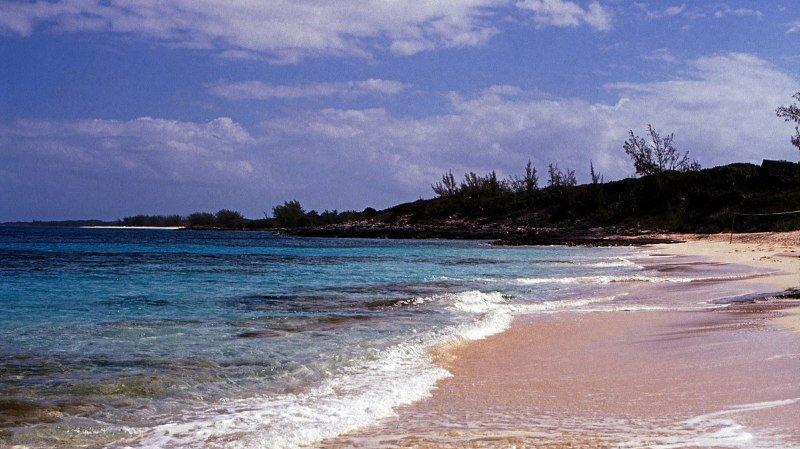 La Californienne âgée de 21 ans a été attaquée mercredi par trois requins alors qu'elle nageait en plongée libre au large de Rose Island, à l'est de Nassau. (illustration)