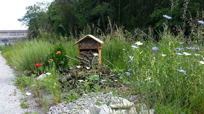 Biodiversité: le Parc Chasseral vous aide à bien aménager votre jardin