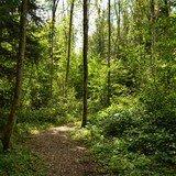Se ressourcer dans la forêt en famille