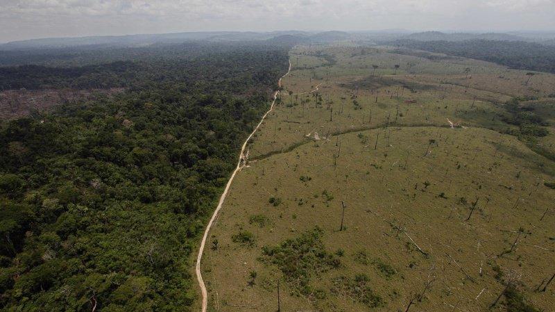 Environnement: déforestation et réchauffement climatique menacent la vie sauvage