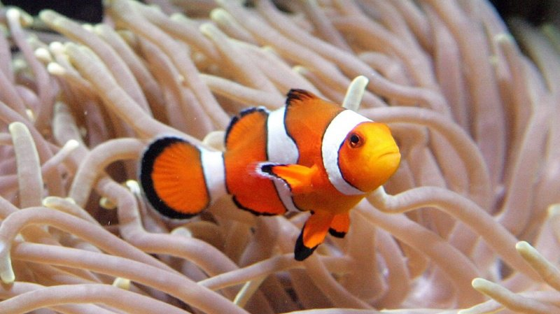 Environnement: la pollution lumineuse menace les poissons du monde de Nemo