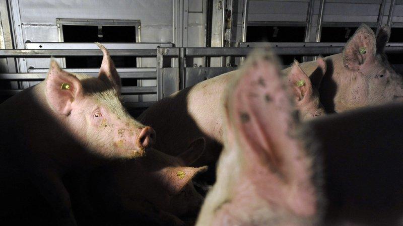 L'importation d'animaux et d'aliments d'origine animale devrait aussi répondre aux nouveaux critères.