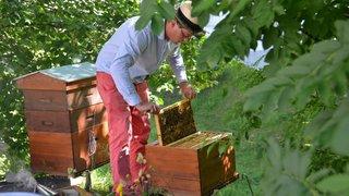 Des écoliers de La Côte-aux-Fées rendent visite aux abeilles