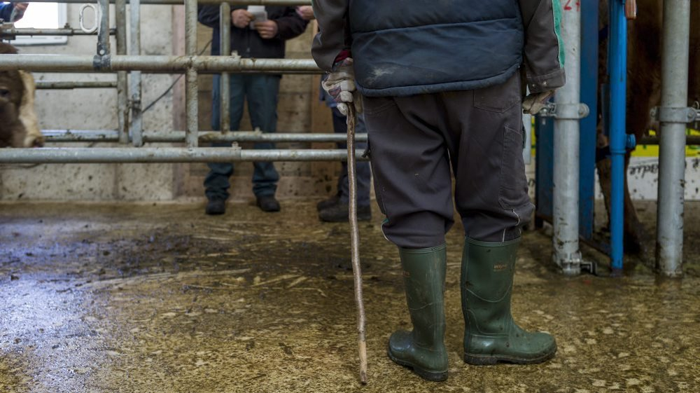 Exploiter des étrangers en situation de faiblesse est une pratique courante dans les milieux agricoles, selon la procureure.