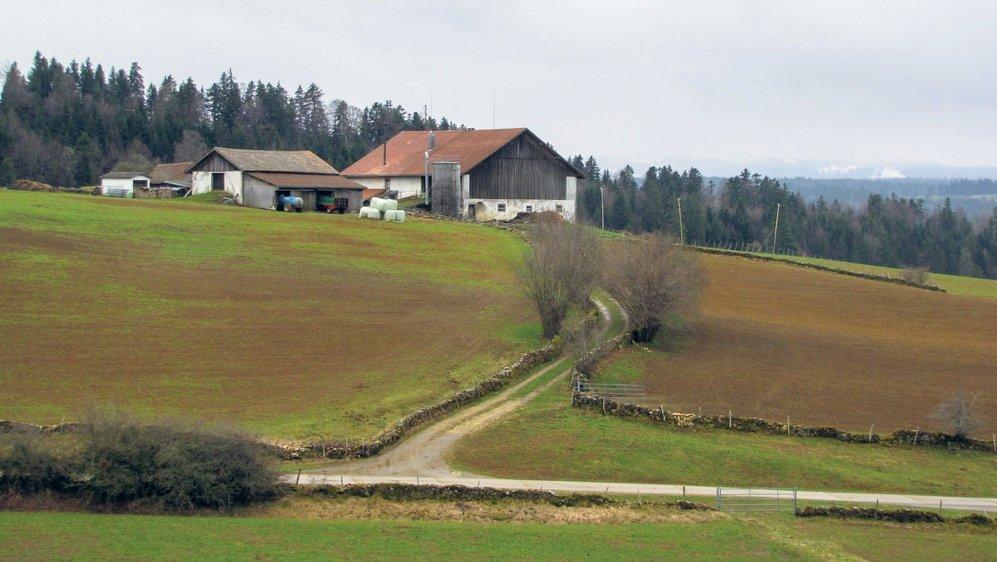 Dès que les herbages permanents représentent plus de 60 à 70% de la surface agricole, les campagnols terrestres pullulent régulièrement tous les six ans entre 700 et 1400 mètres d'altitude, comme ici en 2012.