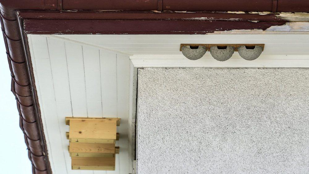 Nids à hirondelles de fenêtres et à martinets sous le toit d'une maison des Bois.     LES BOIS 25/07/2019 Photo: Christian Galley