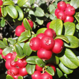 Terroir et patrimoine - Balade sur les plantes