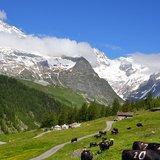 Terroir et patrimoine - Visite de l'alpage des Ars