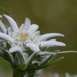 Visite guidée thématique - Secrets de plantes