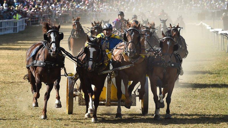 Marché-Concours: bien-être des chevaux capital durant les courses