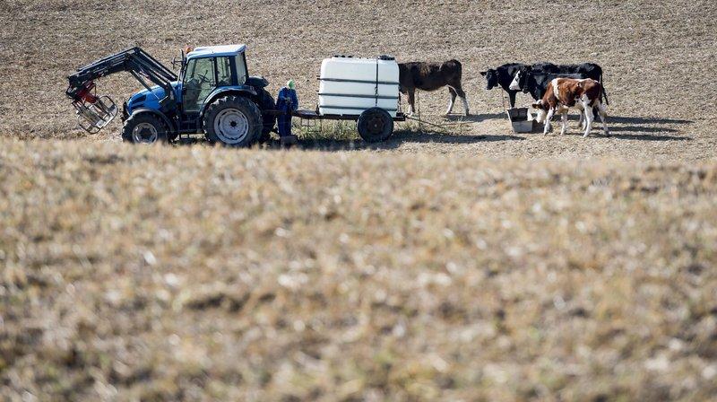 Sécheresse: bol d'air pour les agriculteurs neuchâtelois