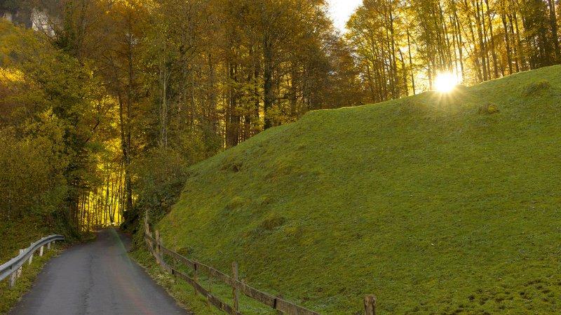 Forêts: deux arbres pourris tombent sur une route, les propriétaires doivent passer à la caisse