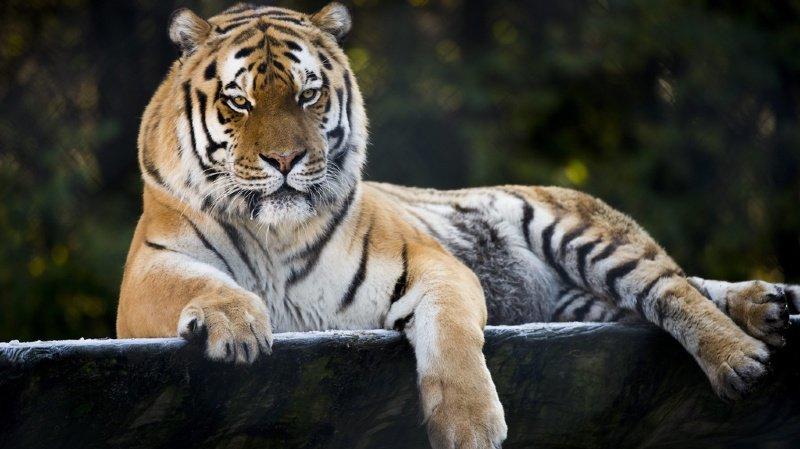 Environnement: la CITES appelle à protéger les espèces menacées