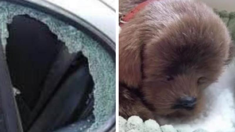 Pendant la canicule, il casse la vitre d'une voiture pour sauver un chien… en peluche