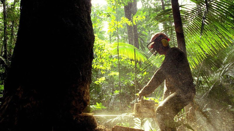 Protection de l'Amazonie: la Norvège bloque ses subventions au Brésil