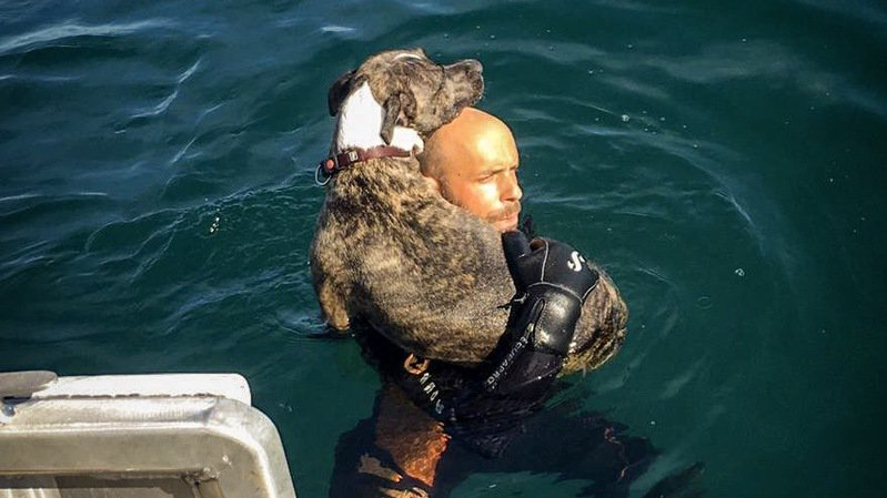 Neuchâtel: Black, le chien sauvé de la noyade par les pompiers
