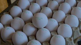 Pour ne pas jeter ses œufs bio, un petit producteur d'Yvonand casse les prix