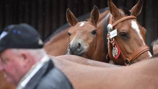 Saignelégier: la Protection suisse des animaux veut davantage de confort pour les chevaux du Marché-Concours
