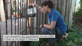 La ville de Zurich lutte contre le moustique tigre