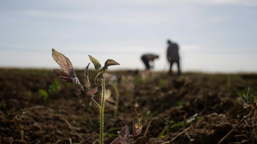 Des organisations comme SfruttaZero produisent de la sauce tomate de manière écologique et éthique, afin de lutter contre l'exploitation des ouvriers et des terres par la mafia.