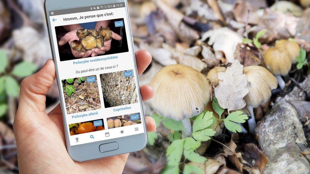 Les applis pour champignonneurs se multiplient. Mais méfiance... Il faut mieux consulter un spécialiste après chaque récolte.
