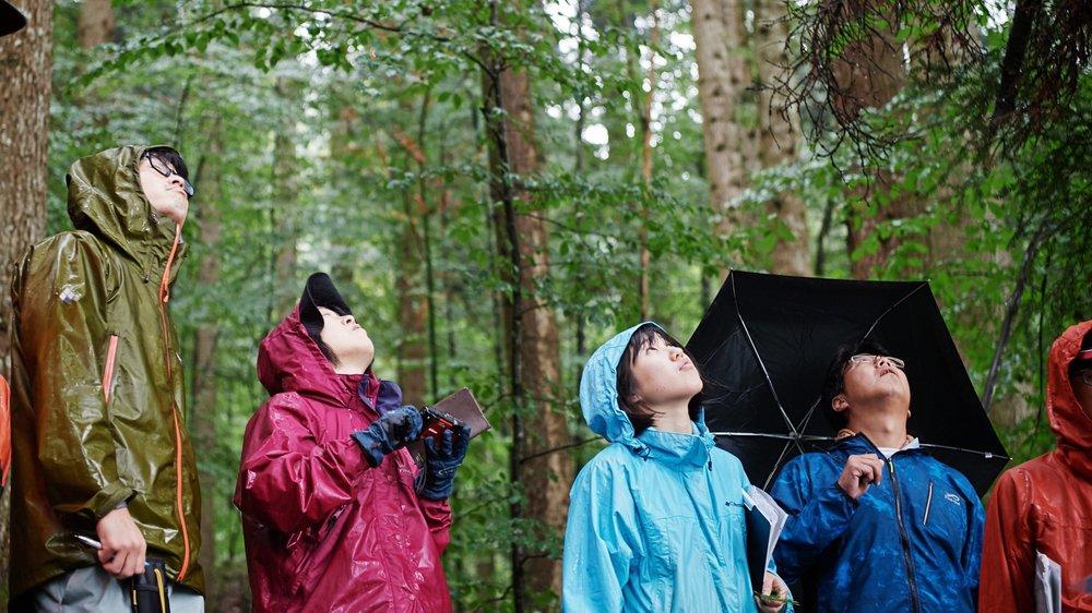 Les visiteurs japonais ont apprécié la forêt de Couvet, même sous la pluie battante.