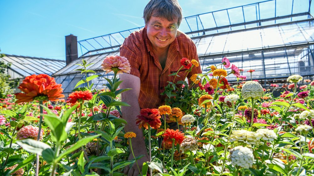 Bernard Frey au milieu de ses fleurs (ici des zinnias).