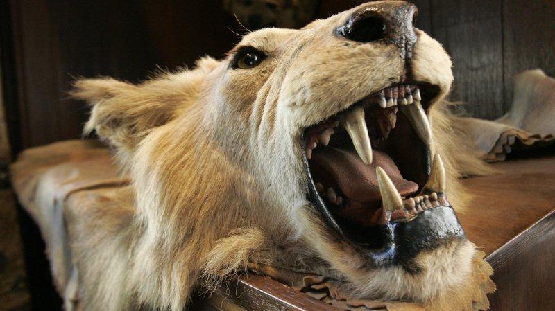 Payer pour tuer un animal sauvage? Une pratique courante dans de nombreux pays du monde (illustration).