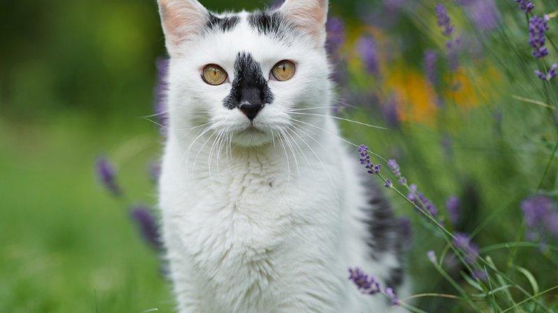 100000 chats errants en Suisse : le National veut stériliser ceux qui n'ont pas de puce électronique