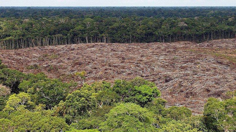 """Un peu plus de 65% des terres déboisées en Amazonie sont aujourd'hui occupées par des pâturages"""", explique Romulo Batista, chercheur chez Greenpeace."""