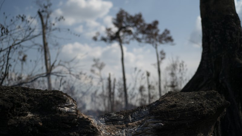Amazonie: le Brésil a connu des années bien pires avec plus d'incendies