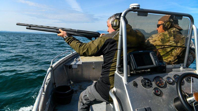 Lac de Neuchâtel: la récré est finie pour les cormorans!