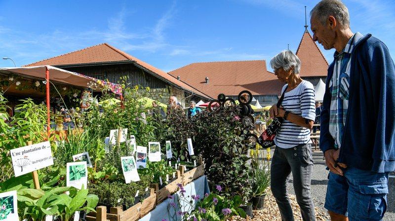 Le marché bio de Saignelégier. Photo: Christian Galley