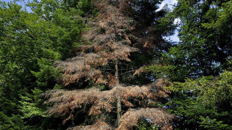 Le réchauffement climatique va modifier la nature des forêts neuchâteloises
