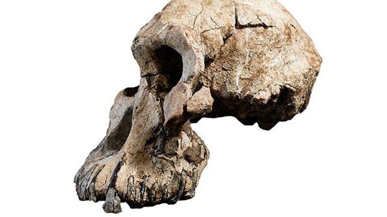 Même s'il est tout petit, le crâne devait être celui d'un adulte, à priori masculin.