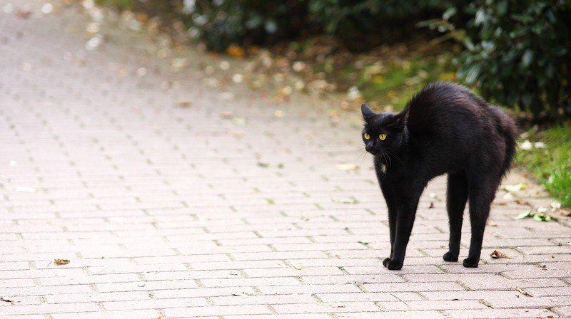 Le chat noir qui porte malheur est l'une des superstitions les plus courantes. (Illustration)