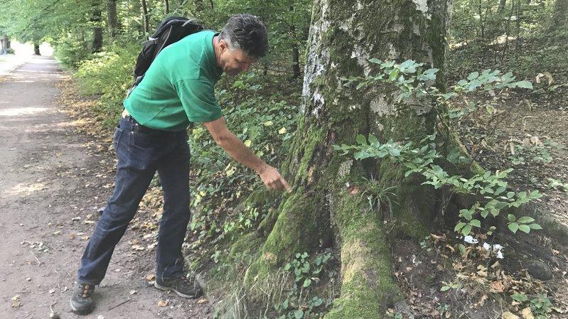 Neuchâtel met en place une stratégie d'adaptation face au dépérissement des arbres