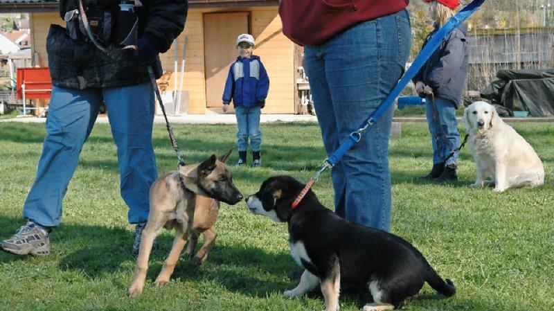 Les nouveaux propriétaires de chiens devront suivre des cours