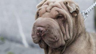 Psychologie: les personnes en surpoids nourrissent souvent trop leur chien