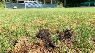 FC Auvernier: infesté par un champignon, le terrain doit fermer