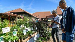 Gros succès populaire pour le marché bio de Saignelégier