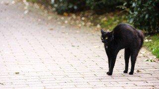 Vendredi 13, miroir brisé ou chats noirs… on vous explique 13 superstitions populaires
